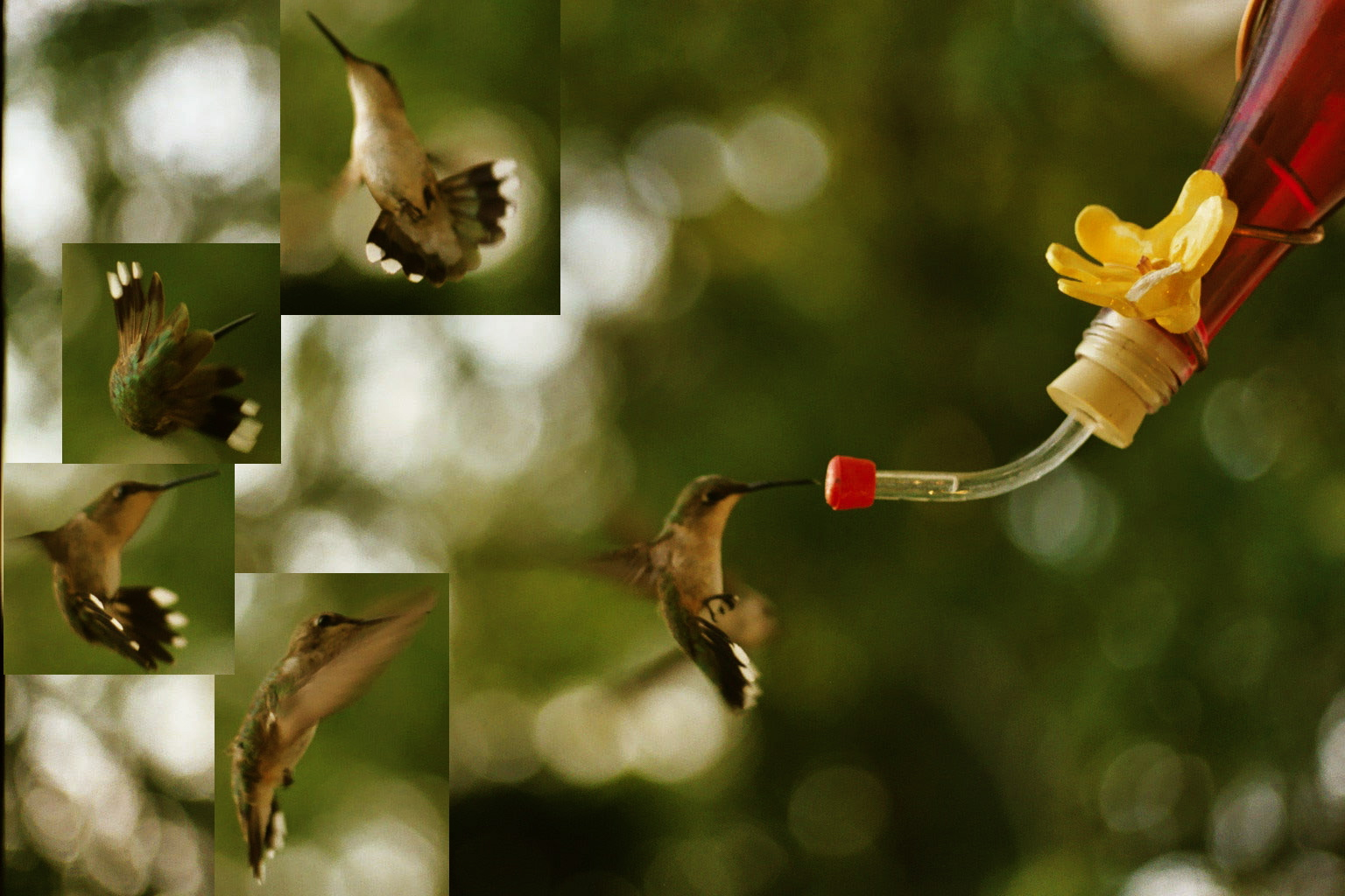 how to get a hummingbird out of the house